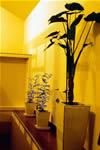 祐天寺の家 3F ラウンジ 植物